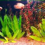 Классический тропический аквариум. Академия. Аквариум 800 литров.